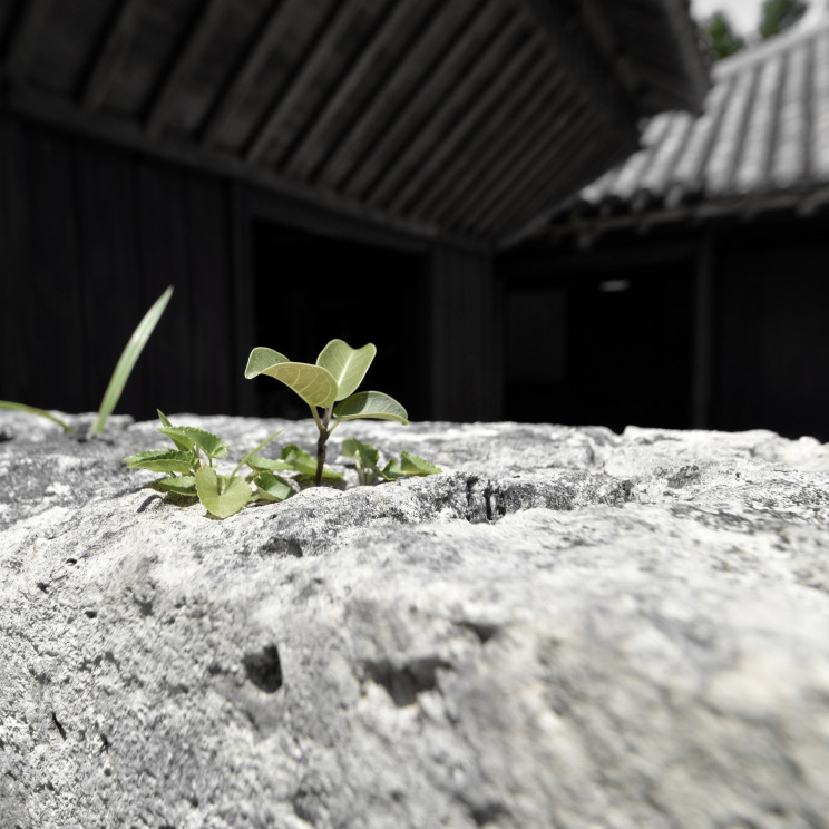 300年前のパッシブデザインハウスin沖縄