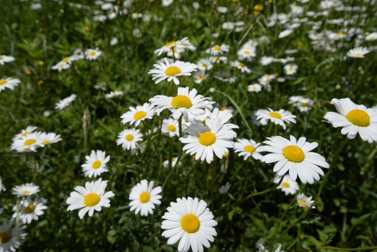 笑顔の花たち
